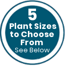 We have 5 plants sizes to choose from, see below for more details