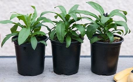 9cm Potted Plants