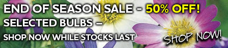 end of season bulbs sale