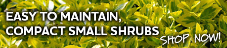 compact small shrubs
