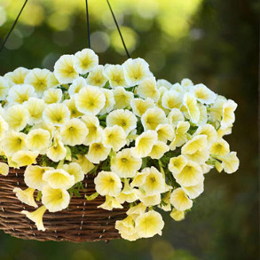 View All Flower Seeds