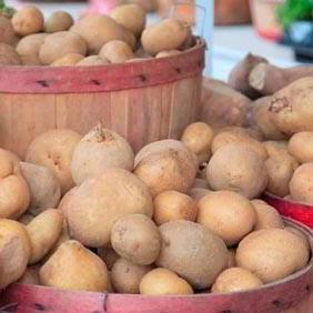 All Seed Potatoes