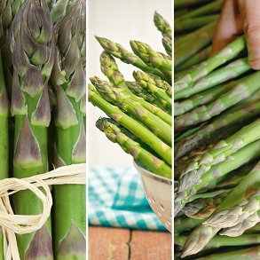 Asparagus Continuity Collection