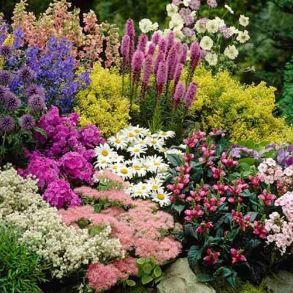 Perennial Collection - 18 Plants for £25