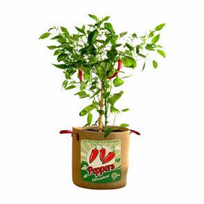 Vintage Pepper Grow Bags - Save £5