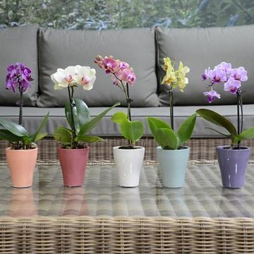View All House Plants