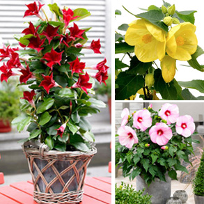 Half Price 2L Plants