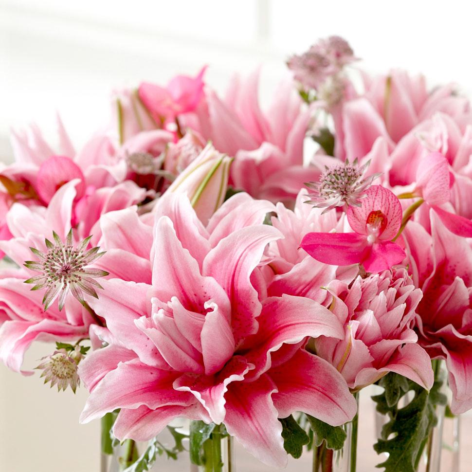 Roselily Bulbs