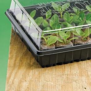 Veg Seeds + Propagator
