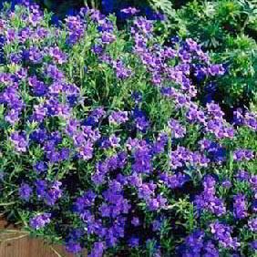 Early Flowering Perennials