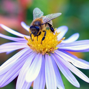 Plants Attractive to Bees