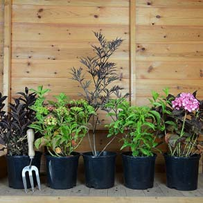 Shrub Lucky Dip - 5x 3L Plants