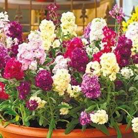 Stock Plants