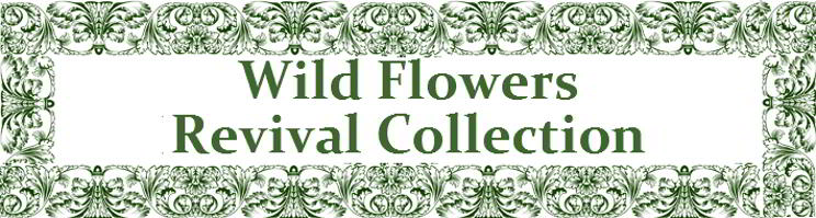 Wild Flower Revival