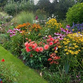 Cottage Garden Perennials - Our Selection