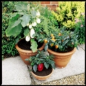 Patio Veg Plants Kits
