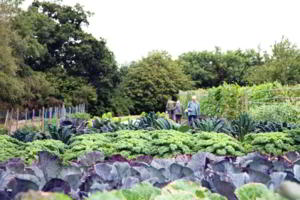 Open Day Veg