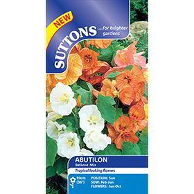 Abutilon Seeds - Bellvue Mix
