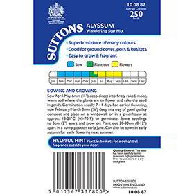Alyssum Seeds - Wandering Star Mix
