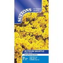 Alyssum saxatile Seeds - Golden Queen