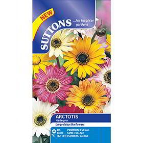 Arctotis Seeds - Harlequin