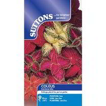 Coleus Seeds - Rainbow Mix