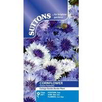 Cornflower Seeds - Classic Fantastic