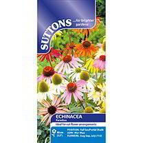 Echinacea Seeds - Paradiso Mix