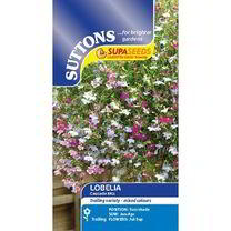 Lobelia Seeds - Cascade Mix