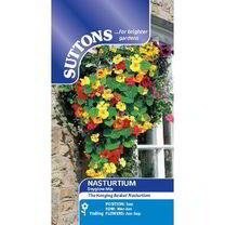 Nasturtium Seeds - Dayglow Mix