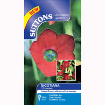 Nicotiana Seeds - F1 Tinkerbell