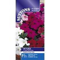 Petunia Seeds - F1 Super Hybrid Mix (Grandiflora)