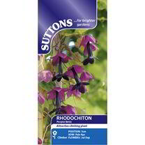 Rhodochiton atrosanguineum Seeds