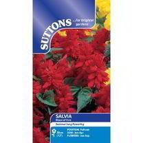 Salvia splendens Seeds - Blaze of Fire