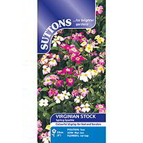 Virginia Stock Seeds - Spring Sparkle