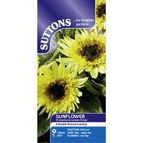 Sunflower Seeds - F1 Starburst Lemon Eclair