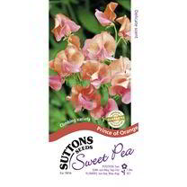 Sweet Pea Seeds - Prince of Orange