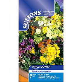 Wallflower Seeds - Lollipop