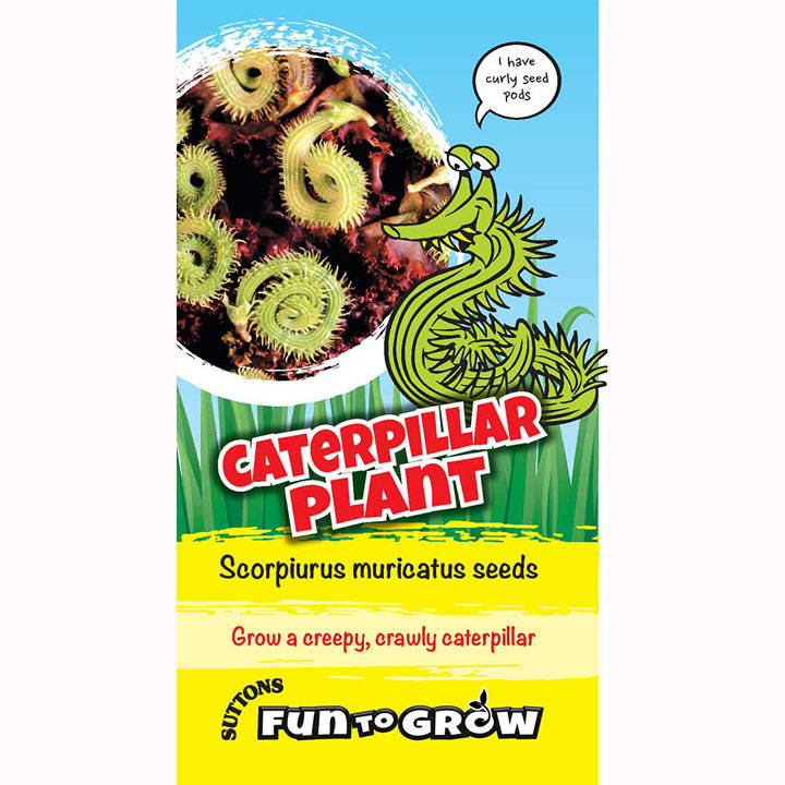 Scorpiurus muricatus Seeds - Caterpillar Plant (Mix)