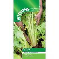 Celery Seeds - Loretta