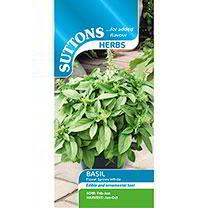 Herb Seeds - Basil Floral Spires White