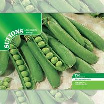 Pea Seeds - Early Onward