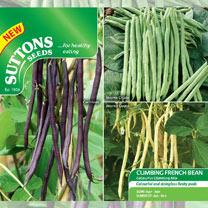 Bean (Climbing French) Seeds - Colourful Climbing Mix