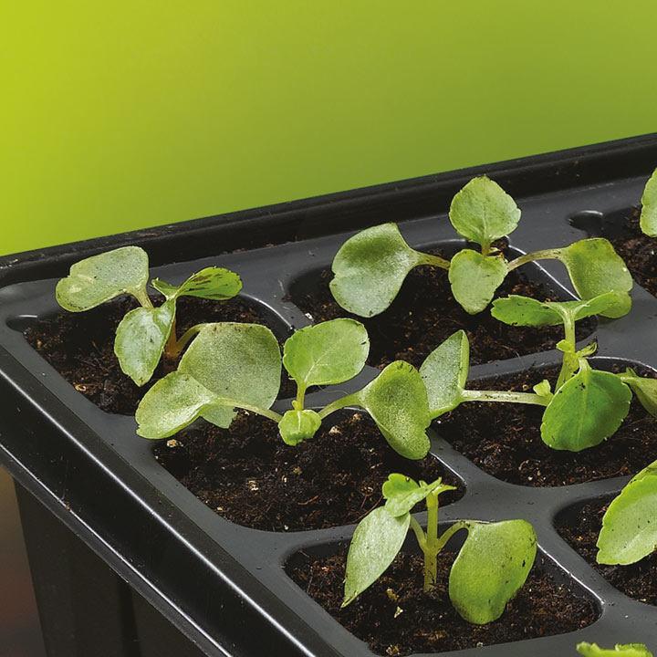 Sow & Grow 72 x 4cm Plug Plant Starter Set
