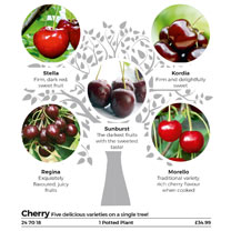 Perfect if you have only a limited space for growing fruit trees, but would love to have a wide range of delicious varieties to enjoy! Each of these t