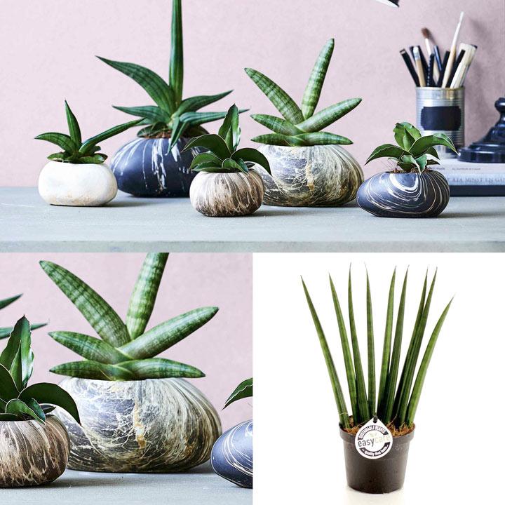 Stone Planter 18cm + Free 9cm Plant