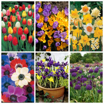 Click to view product details and reviews for 400 Spring Flowering Bulbs.