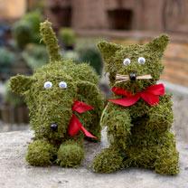 Moss Animal - Playing Dog