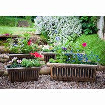 Basket & Containers 9cm Bedding Plants - Lucky Dip