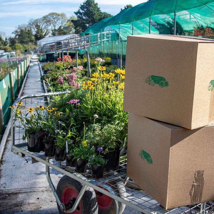 Perennial Plant Mystery Parcel - Worth £75